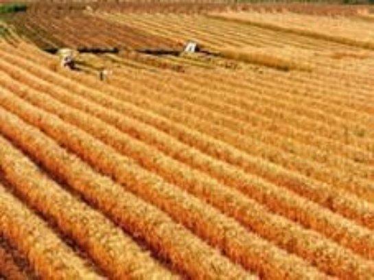 Китайцы хотят заниматься сельским хозяйством в Забайкалье