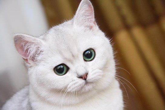 В мире появилась инструкция, в которой содержится информация о том, как нужно гладить кошку