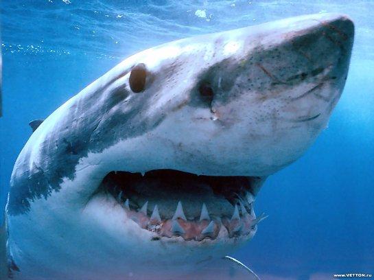 Во время соревнований по серфингу на одного из участников напала акула