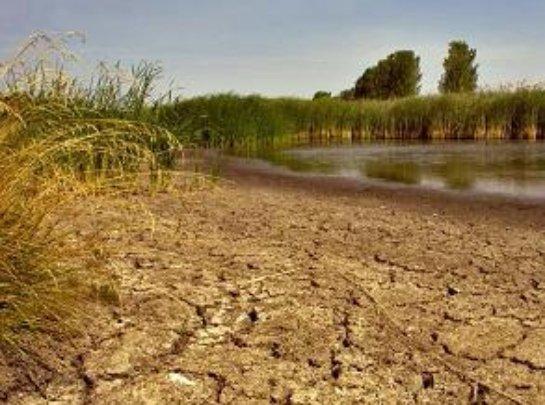 Режим ЧС введен в Волгоградской области из-за сильной засухи
