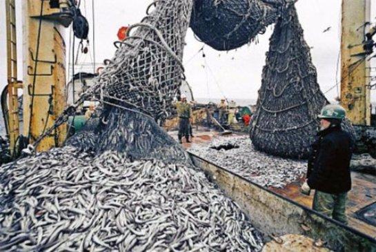 На Курилах будут развивать рыбную промышленность