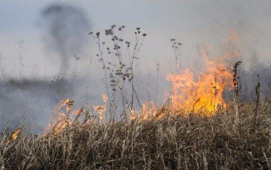 В украинском Чернобыле снова лесной пожар