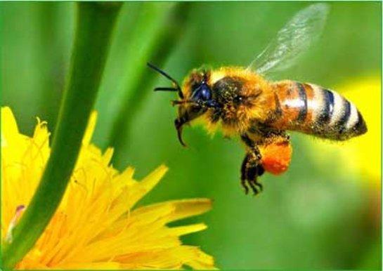 В Перми появится огромный по размерам памятник пчеле