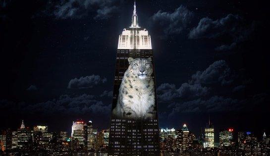 На нью-йоркском небоскребе появились изображения животных, которые находятся на грани вымирания