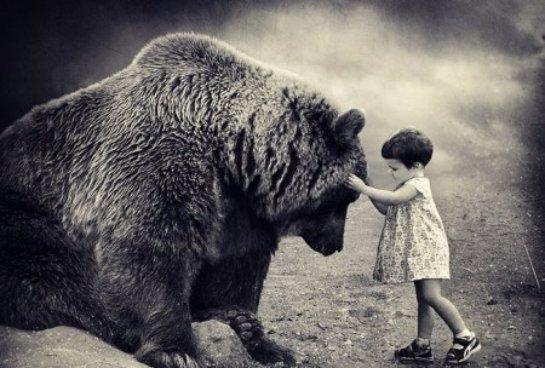 Медведи мешают приморским детсадовцам ходить на прогулки