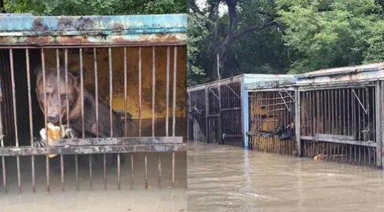 Продолжается эвакуация обитателей уссурийского зоопарка