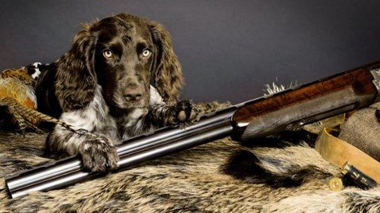 Пермский охотник умер из-за собаки
