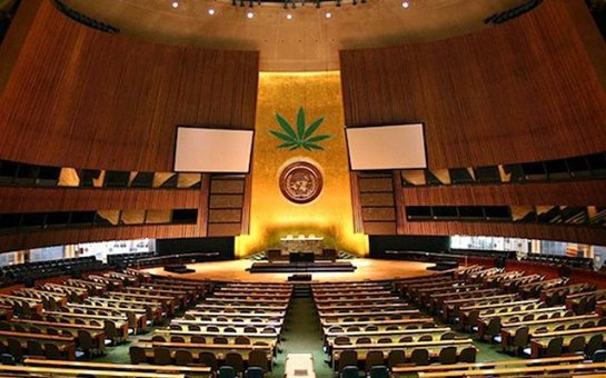 Сотрудники ООН попались на хранении марихуаны и за снимки с детской порнографией