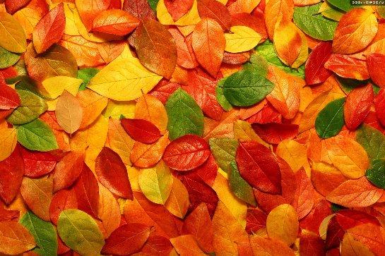 Американец продает желтые осенние листья за границу