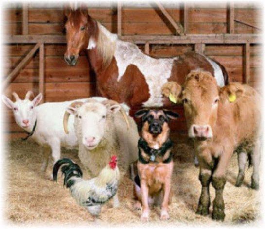 Национальным животноводам увеличили государственную помощь