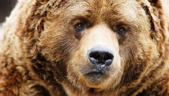 В хабаровском детском саду был застрелен медведь