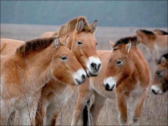 Животные чувствуют себя очень хорошо в Чернобыле