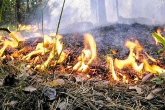 Сжигание сухой травы теперь будет противозаконным