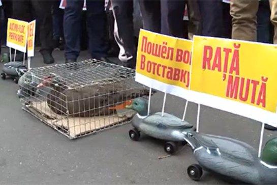 Молдавская оппозиция считает, что утка была бы не плохой заменой действующему президенту