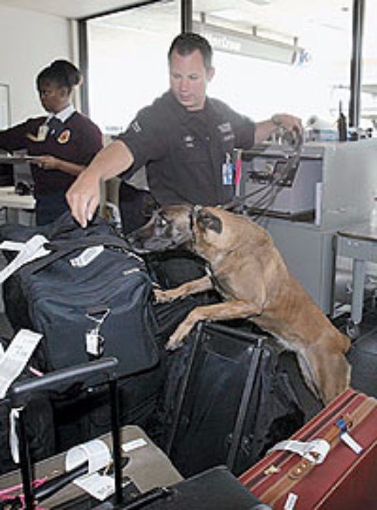 Росавиация поинтересовалась у европейских аэропортов, насколько они безопасны