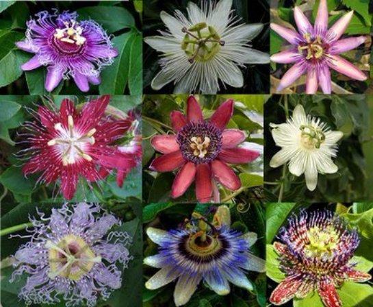 История и развитие цветоводства
