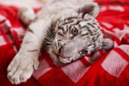 В Ялтынском зоопарке снова потери