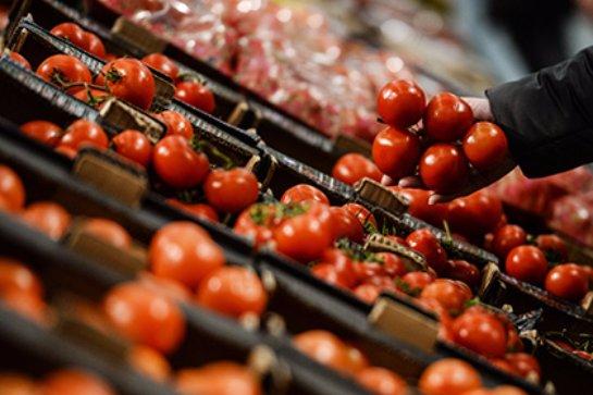 Турция хотела ввезти в Россию зараженные калифорнийским трипсом помидоры