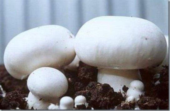 В Ростовской области уничтожили крупную партию грибов