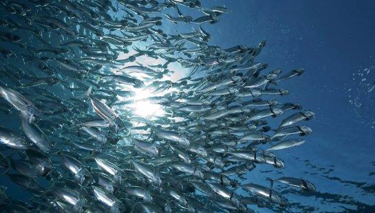 В Петербурге хотят обсудить арктический рыбный промысел
