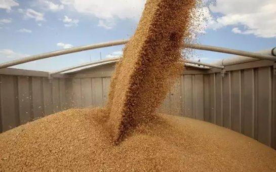 Российскую пшеницу будут продавать в Венесуэлу